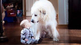Cute Baby and White Dogs Playing Together - Funny Baby Video