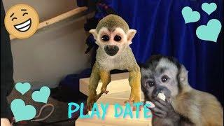 FUNNY Baby Capuchin Happy & oLLie the Monkey FUN