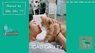 Tổng hợp chó mèo siêu hài hước & đáng yêu #13 | Funny and Cute Dogs and Cats #13