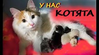 НАША КОШКА РОЖАЕТ КОТЯТ! Теперь у нас кошачий FUNNY 4 День 1 жизнь наших котят
