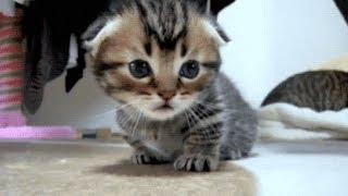 Baby Cats #7 ???? Funny and Cute Baby Cat Videos Compilation (2018) Gatitos Bebes Video Recopilacion