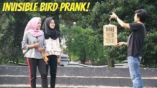 COD BURUNG AJAIB DIDEPAN CEWEK | Prank Indonesia