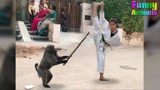 Funny Savage Monkeys! Hilarious! Funniest Animals Videos 2018