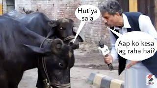 PAKISTANI FUNNY NEWS REPOTERS