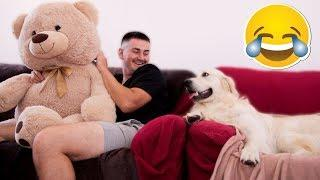 My Funny Dog is Jealous of Me for a Stuffed Toy Bear