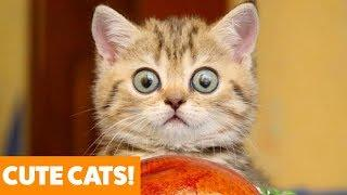 Funny Adorable Cats | Funny Pet Videos