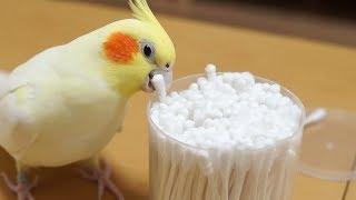 Funny Parrots Going Crazy -  Cutest Parrots Compilation 2018