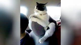 BEST HIGHLIGHTS of CATS, you will LAUGH FOR HOURS! - Funny CAT VIDEOS