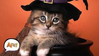 Funny Pets React to Halloween ???? | Funny Pet Videos | AFV Halloween 2018